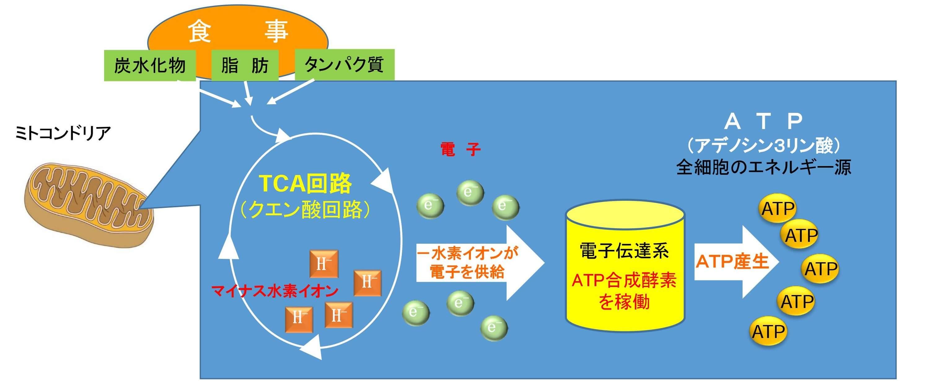 水素&青パパイヤ酵素の説明画像